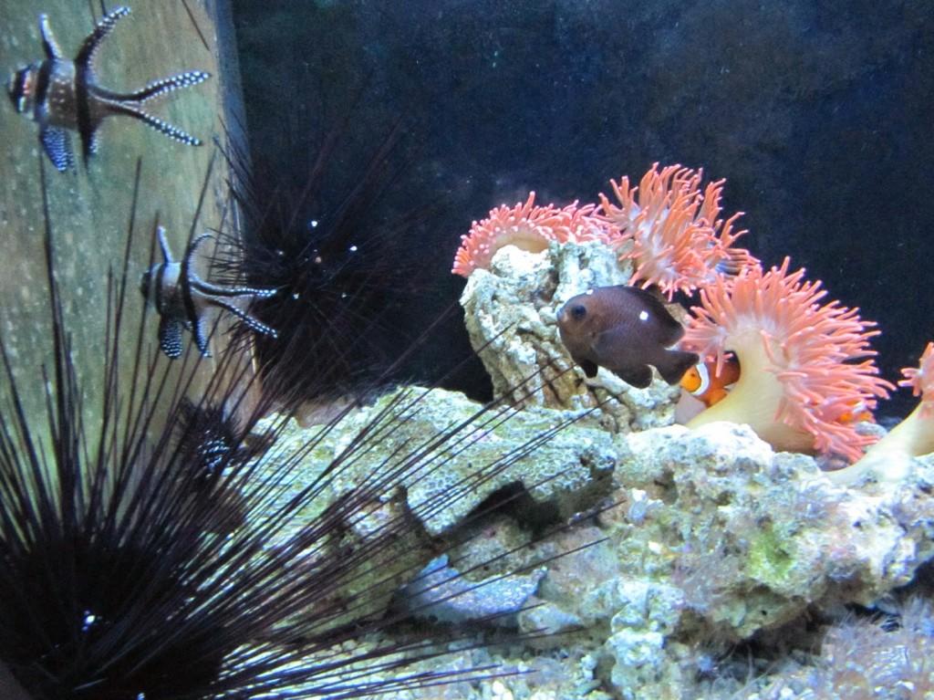 подводный мир океанариума