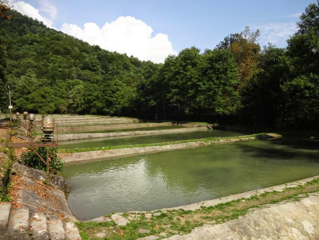 форелевое хозяйство на черной речке ванны