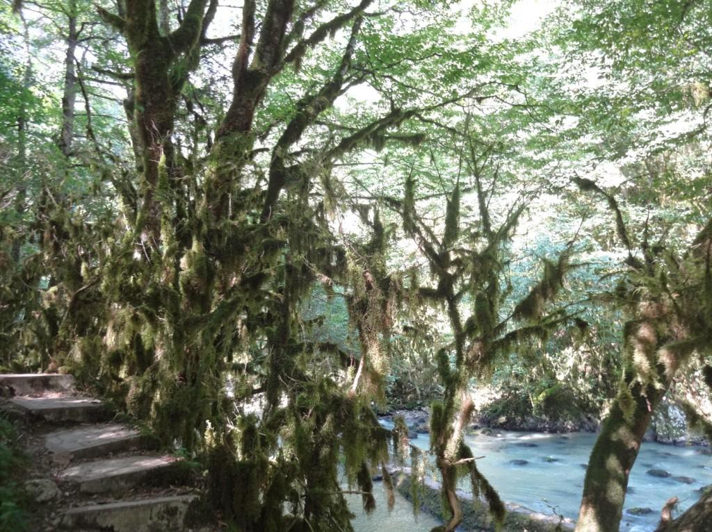 самшитовая роща река мчишта