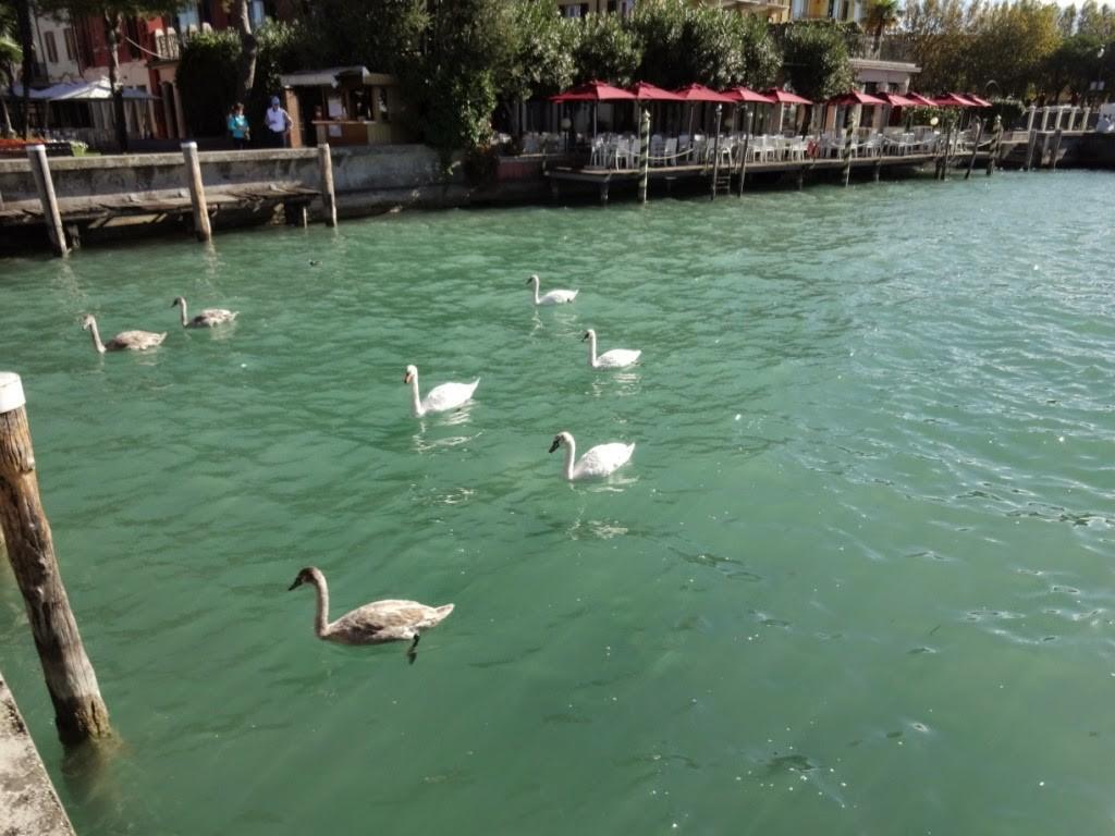 лебеди в сирмионе