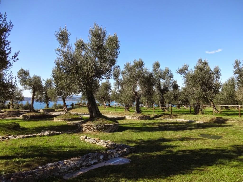 оливковая роща сирмионе