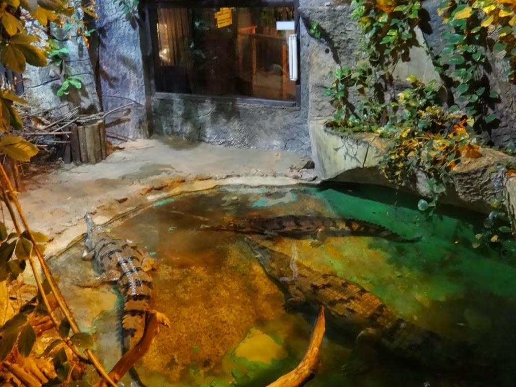зоопарк в Риге тропический дом крокодилы