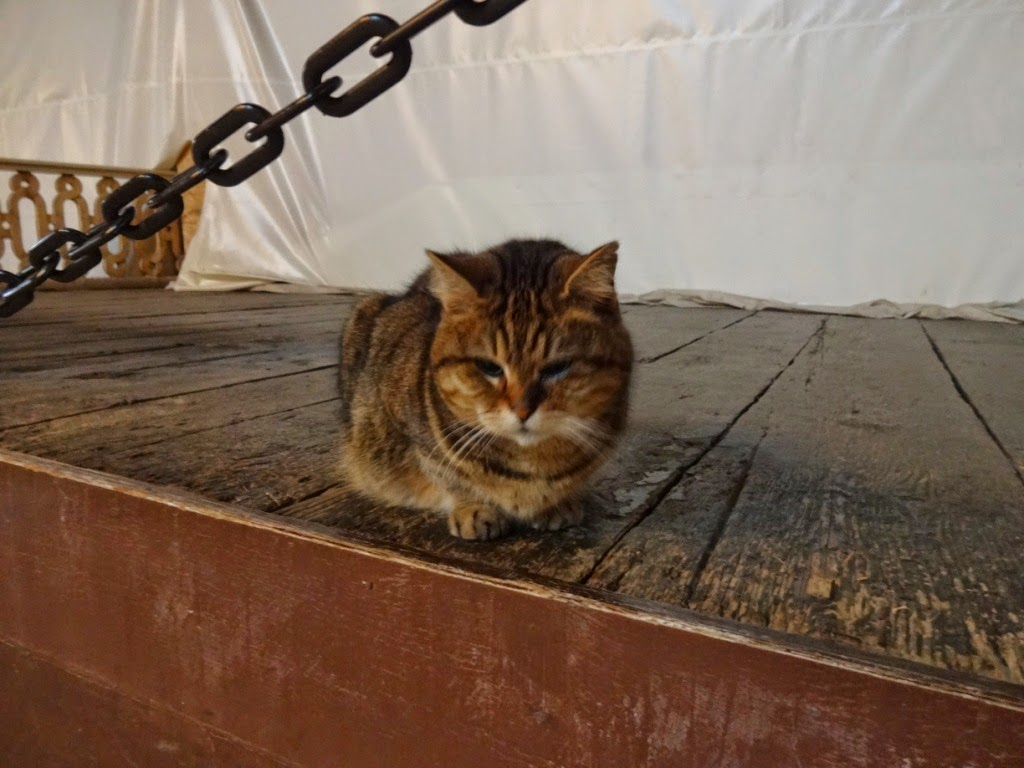 Айя софия стамбул кот