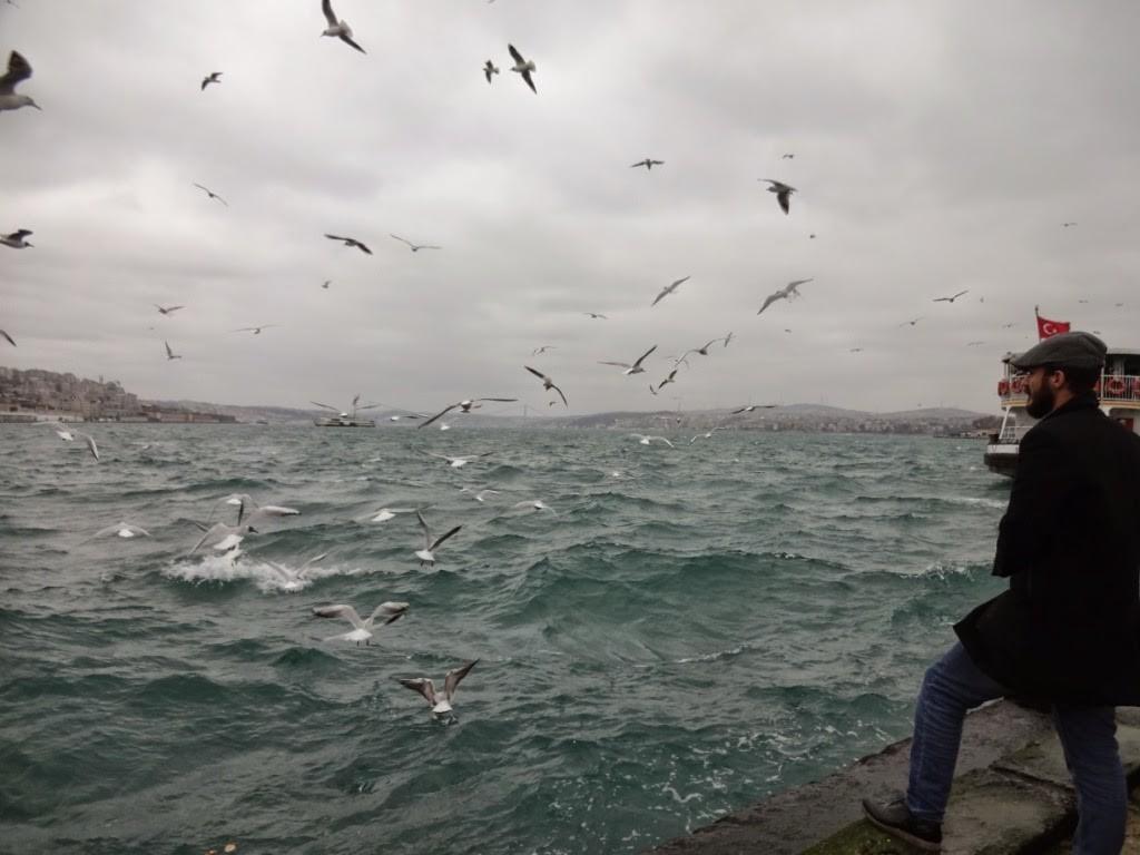 стамбул чайки босфор