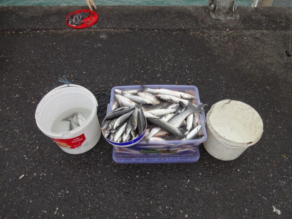 галатский мост рыбалка