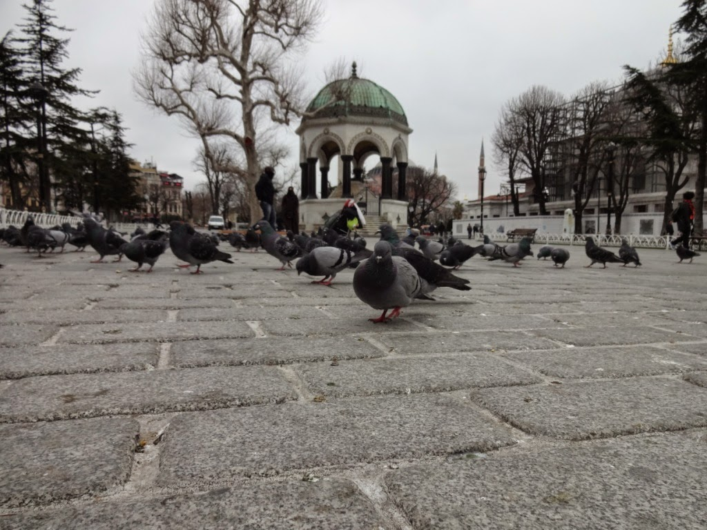 площадь Ипподром голуби