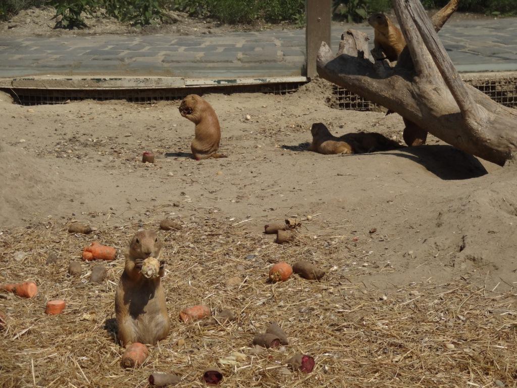 суслики зоопарк будапешта