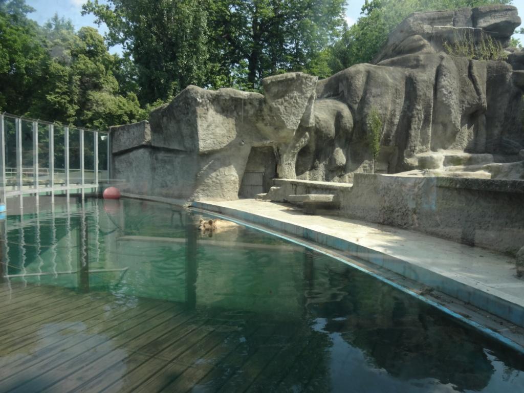 зоопарк будапешта медведь