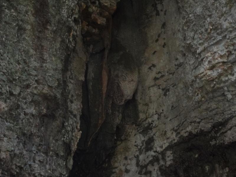 мартвильский каньон грузия динозавры