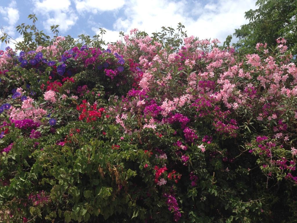 цветы разнообразие мальта