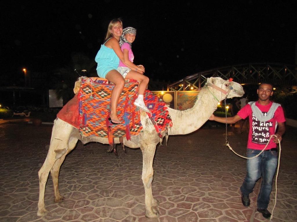 египет верблюд