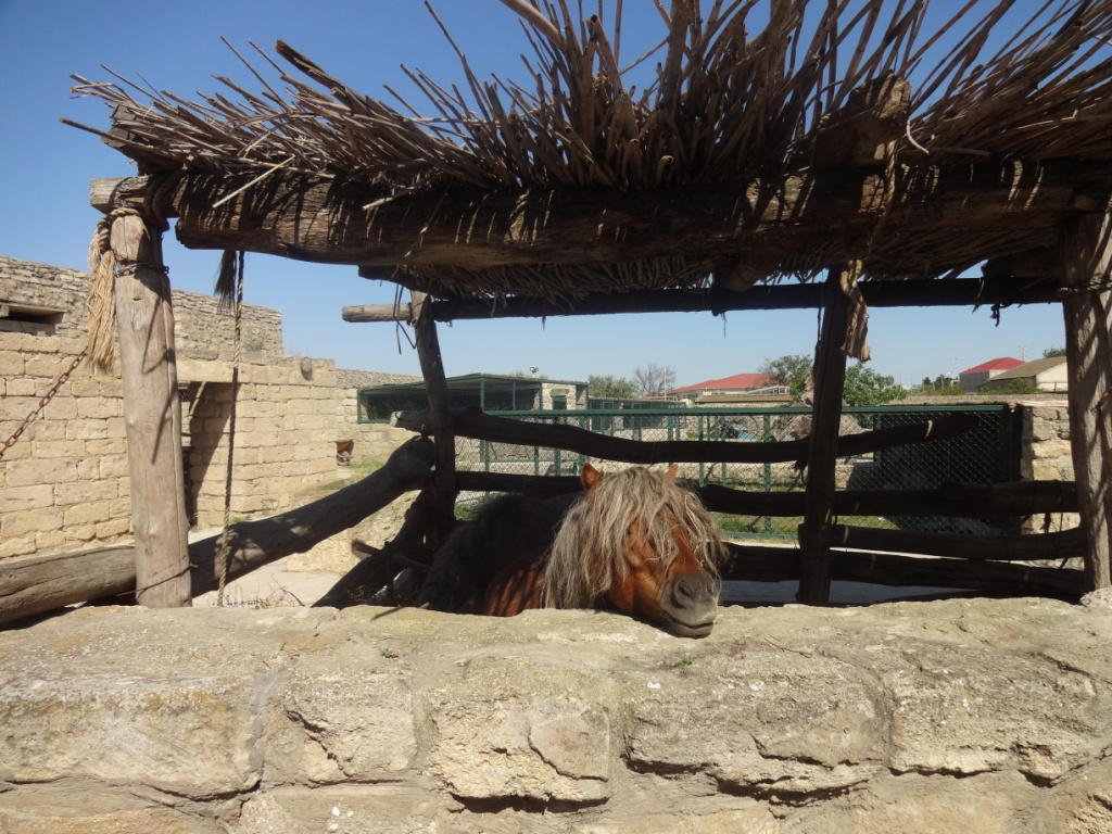 музей гала скотный двор