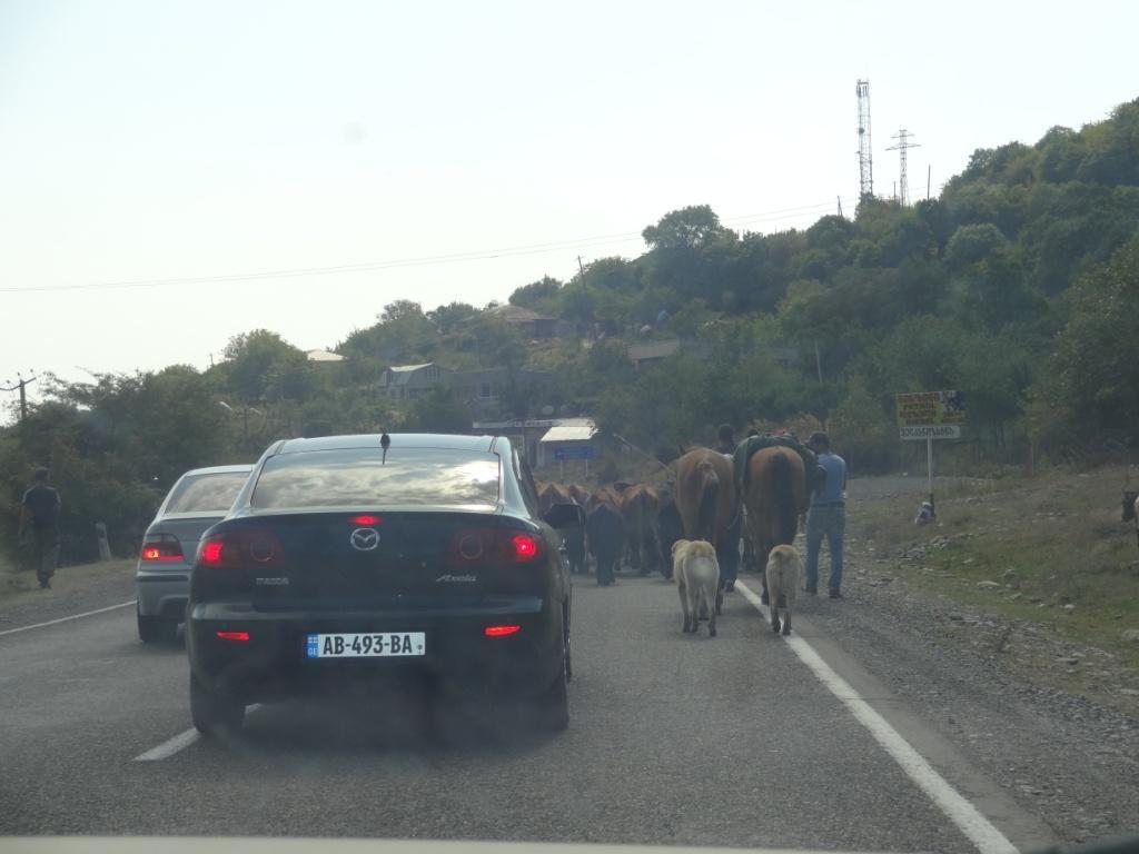 коровы на дороге в грузии