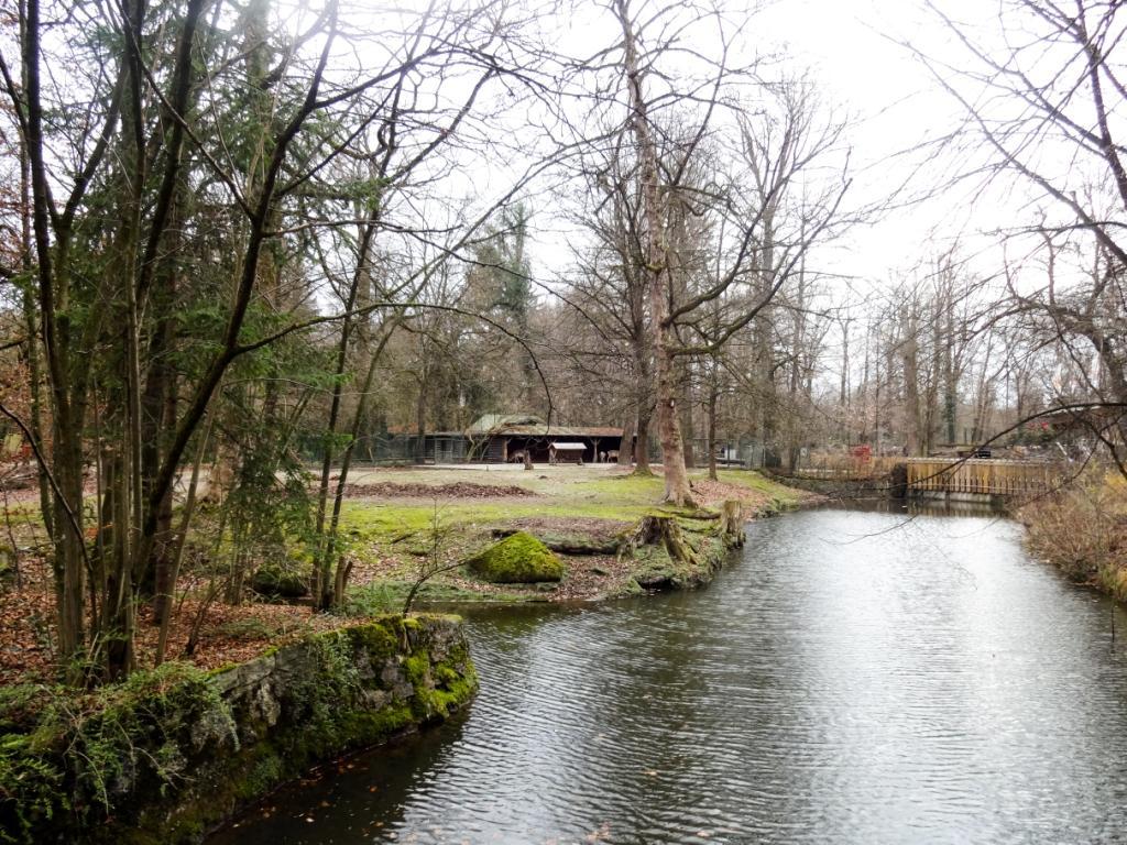 зоопарк мюнхен