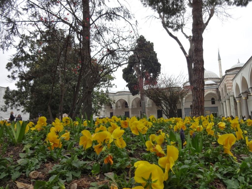 цветы стамбул