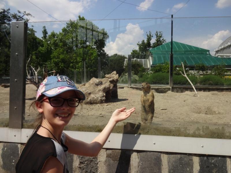 суслики зоопарк будапешт