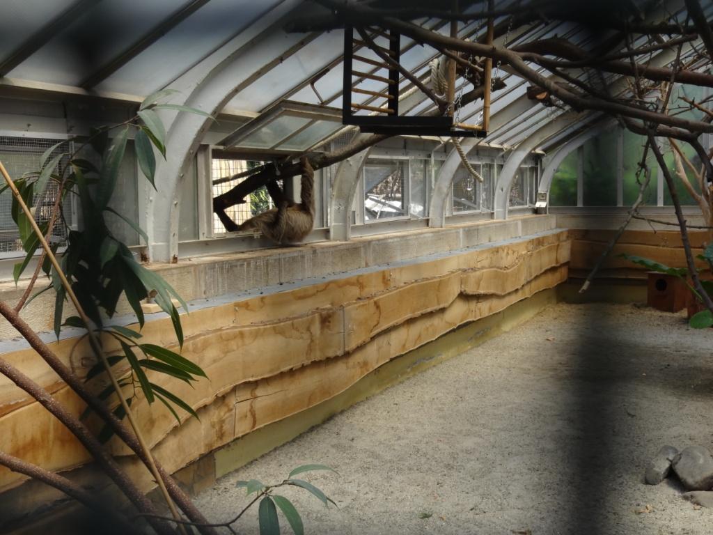 ленивец зоопарк будапешта