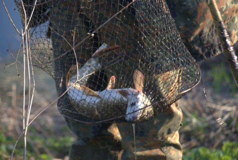 щука рыба улов