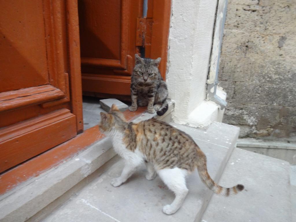 старый баку коты