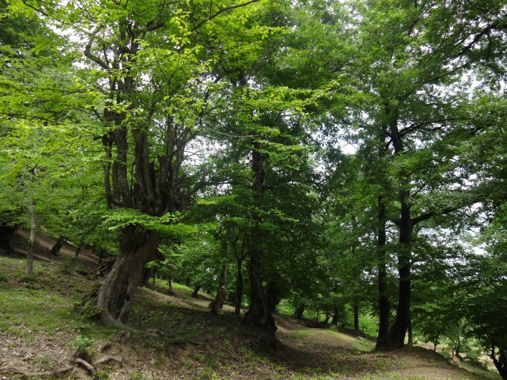ленкорань талышский лес