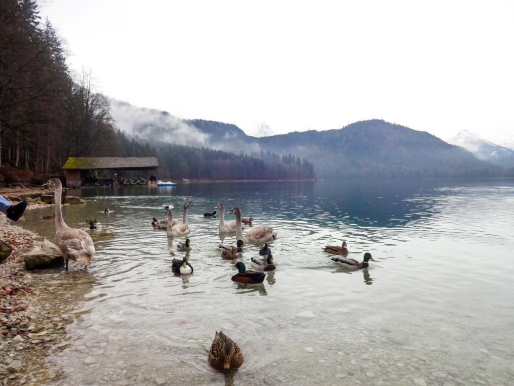 озеро альпзее бавария