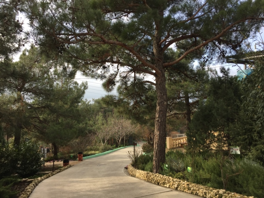 сафари парк в геленджике