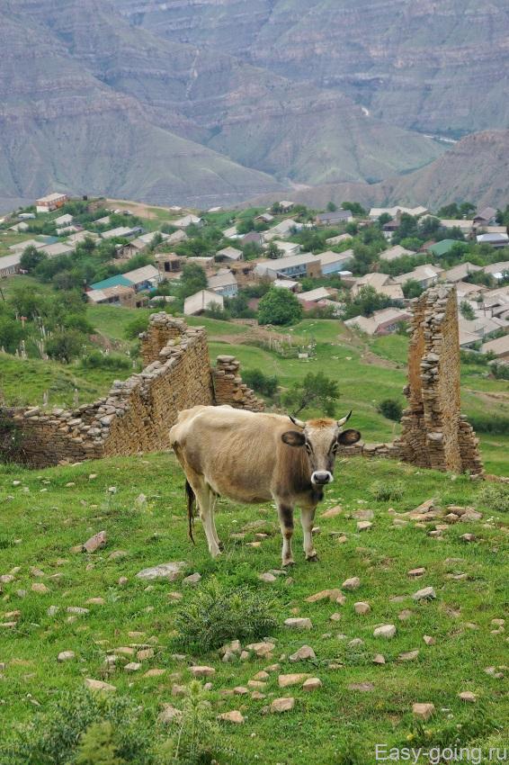 Гоор - заброшенный поселок Дагестан
